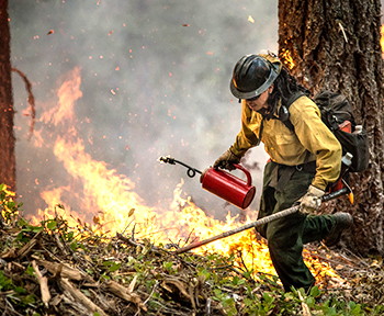 Firefighter in forest