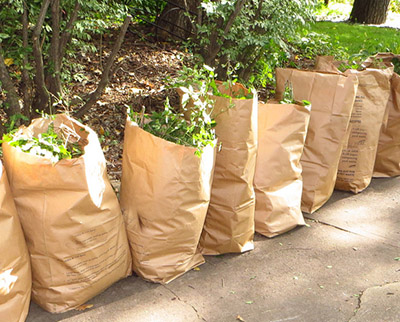 Photo of leaves bagged for disposal