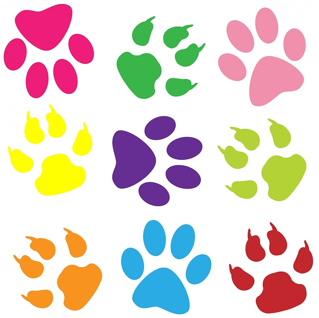 Color illustration of paw prints