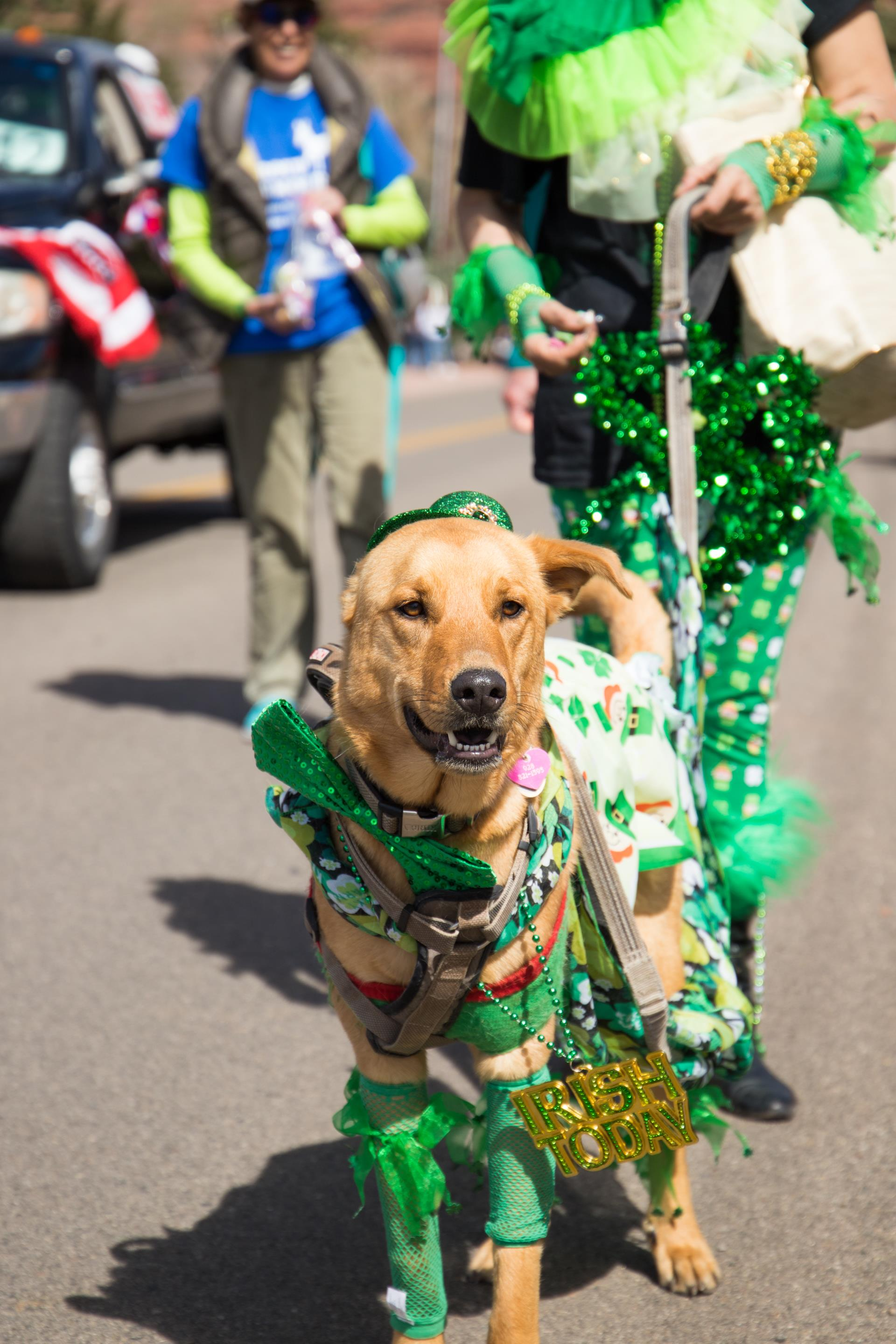 dog dressed in green