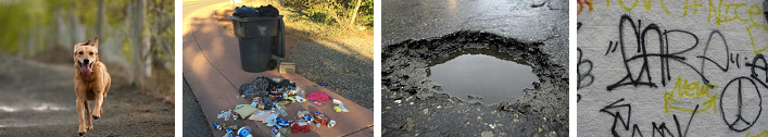 Composite photo of dog, pothole, graffiti and trash